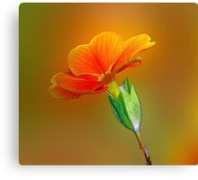 Little Yellow Flowers Canvas Print
