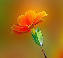 Little Yellow Flowers Photographic Print