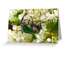 Green Beetle 2 Greeting Card