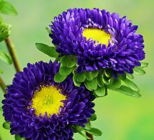 Purple Flowers by Dipali S