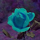 Blue Tongue Rose by dieselpete