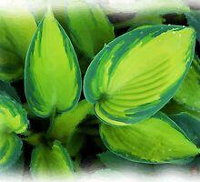 Green Leaves by Jim  Darnall