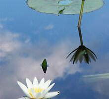 lily pond 4 by schiabor