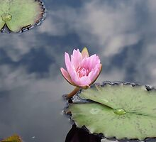 lily pond 7 by schiabor