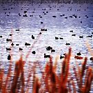 WATERFOWL REFUGE by cshphotos
