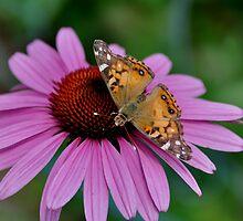 My Butterfly (Kiah Aquino) by Joel Aquino