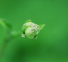 kingdom green by Alexandr Grichenko