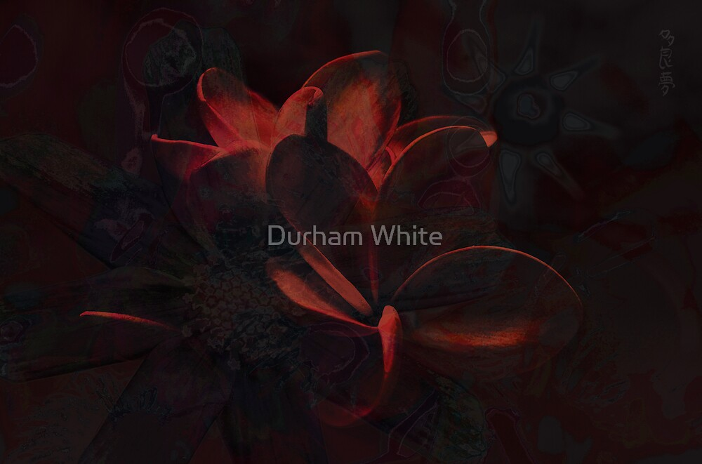state of cosmosis by Durham White