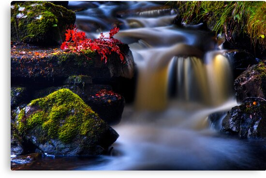 West Highland Burn in Autumn. Scotland. by PhotosEcosse