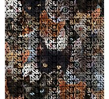 Cats and Cats and Photographic Print
