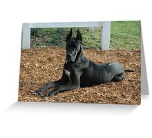 Beautiful Great Dane Greeting Card