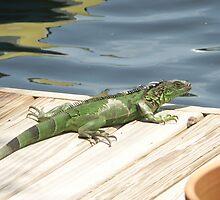 Iguana Invader by Bob Hardy