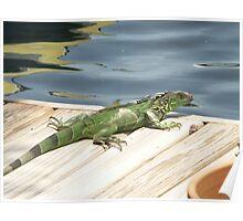 Iguana Invader Poster