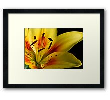 Lilies of the Yard 2 Framed Print