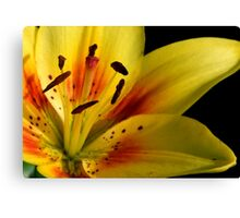 Lilies of the Yard 2 Canvas Print