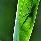 Shadow of the Arachnid  by Dennis Stewart