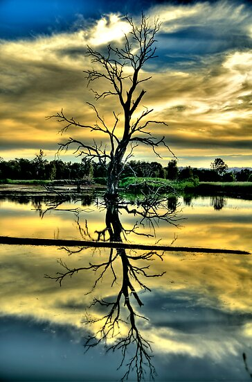Meditation - Wonga Wetlands , Albury NSW - The HDR Experience by Philip Johnson