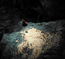 Butterfly at Rest.  by ayham Salameh