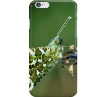 Male Orange Tip Butterfly iPhone Case/Skin