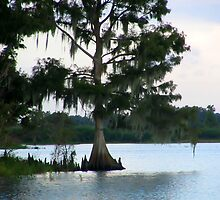 Spanish Moss on Cypress Tree by Dan Shiels