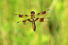 Fly Dragon Fly by ©Dawne M. Dunton