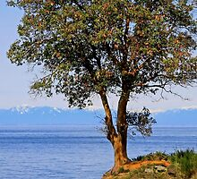 Arbutus Tree by TerrillWelch