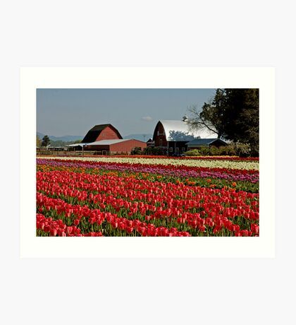 Skagit Valley tulips Art Print