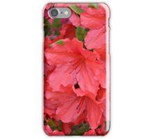 Red Azaleas iPhone Case/Skin