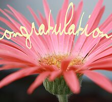 Congratulations! - Gerbera Greetings Card by Susan Brown