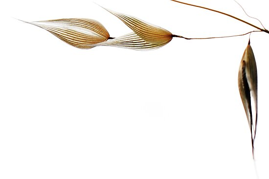 empty grass seeds by nadine henley