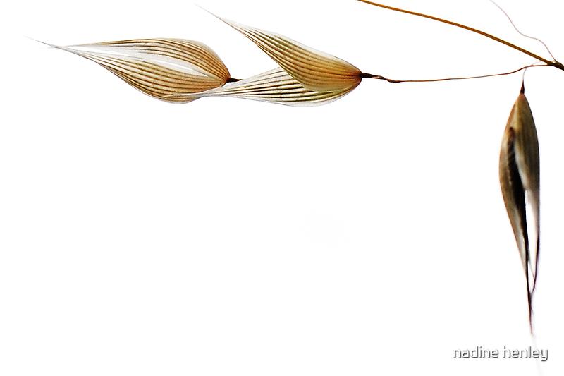 empty grass seeds by nadine henley