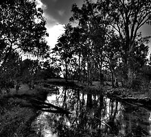 Reflections In Black & White - Wonga Wetlands , Albury NSW - The HDR Experience by Philip Johnson