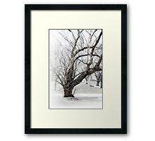 Old Tree on White Framed Print