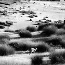 Wallaby jump by Alexander Meysztowicz-Howen