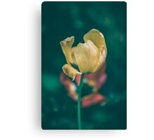 Dream Flower 1 Canvas Print