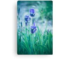 Dream Flowers 3 Canvas Print