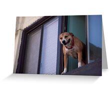 Dog in Window 2 Greeting Card