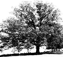 Companion Trees by Jean Gregory  Evans