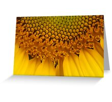 Sunflower Macro Greeting Card