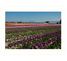 Tuliptown in the Skagit Valley Art Print