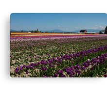 Tuliptown in the Skagit Valley Canvas Print