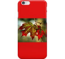 Feeling of Autumn - Maple leaves  iPhone Case/Skin