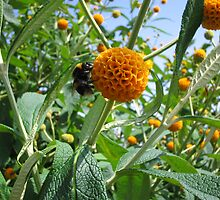 Bee on a Buddleia by Mrsmog