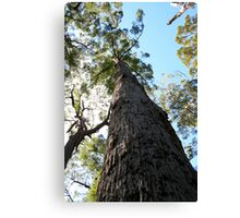 Valley of the Giants, Western Australia Canvas Print