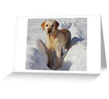 Young Labrador Retriever Greeting Card
