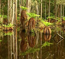 Sisters Creek at Myalla , Nor West Tasmania , Australia by phillip wise