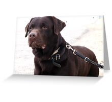 Unbelievable Labrador Retriever Greeting Card