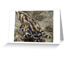 Blue Lined Octopus Greeting Card