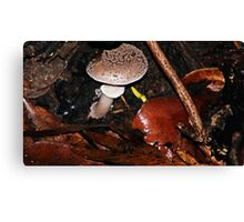 Mushroom hide out  Canvas Print