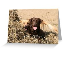 Adorable Labrador Retriever Greeting Card